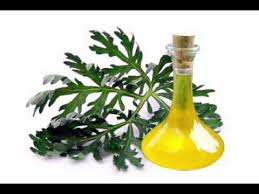 Essential Oil Absinthe