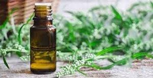 Essential Oil Artemisa Abrotanum