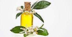 Essential Oil Artemisa Vulgaris