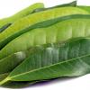 Allspice Leaf