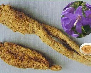 Adenophora Extract