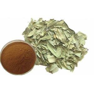Apocynum Venetum Leaf Extract